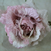 Peach/Pink Crinoline Rose