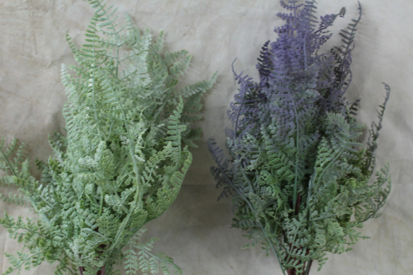 Forest Fern Bushes