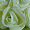 WFCF16 Ivory on Ivory coloured foam Rose half Pomander