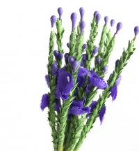 Quality heather bunches packed in sleeves of 6 bunches.