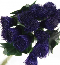 Quality thistle bunches packed in sleeves of 6.