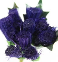 Quality larger thistle bunches packed in sleeves of 6.