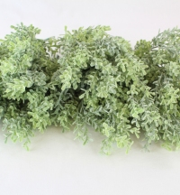30cm Frosted Thyme Bush
