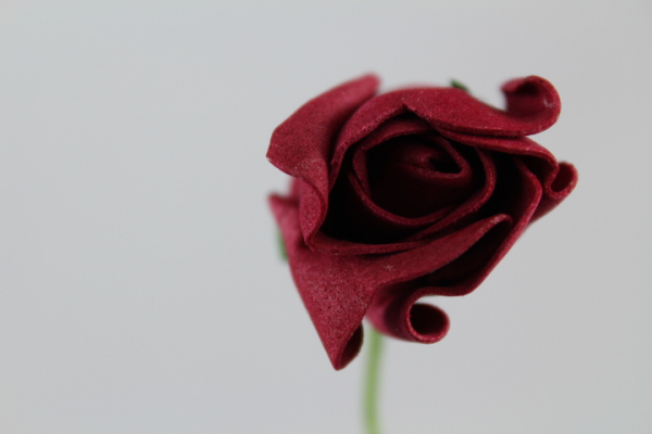 Single Burgundy Rolled Rose