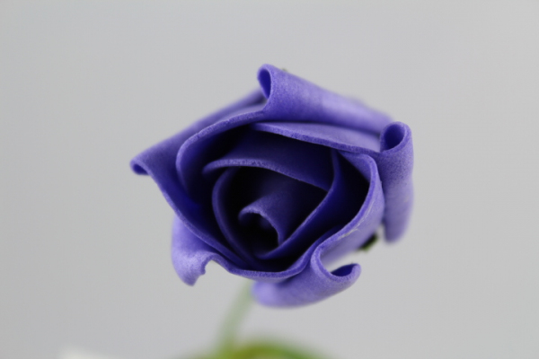 Single Purple Rolled Rose From WFC UK